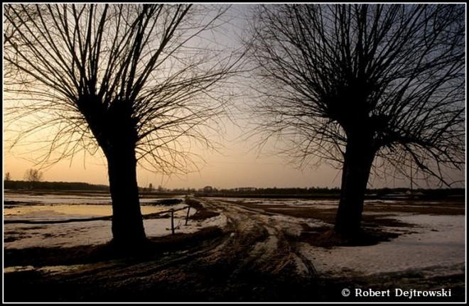 Wierzby - okolice Maciejowic